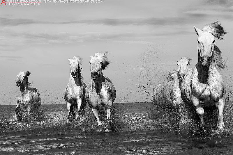 White-horses--2