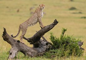 Masai-preview