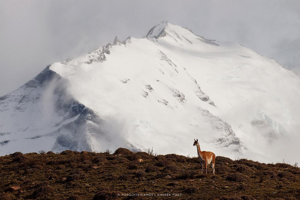 Puma expedition - Grandi Viaggi Fotografici