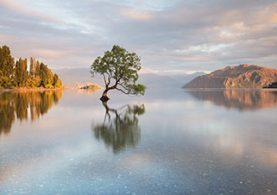Nuova-Zelanda-anteprima